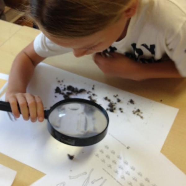 Jong Zuid: uilenballen pluizen