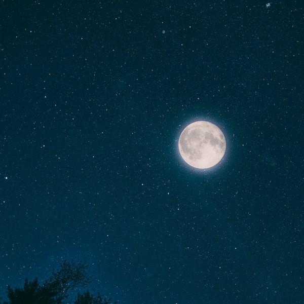 Nacht van de Nacht in het Steenbergerpark