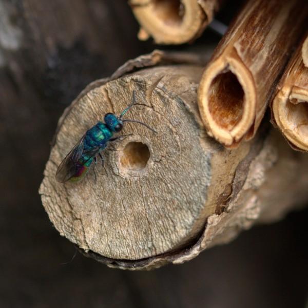 Bouwen voor insecten